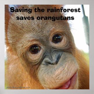 Protección del orangután póster