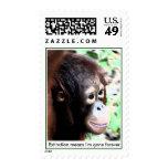 Protección en peligro orangután de la especie franqueo
