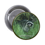 """""""PROTECT OUR WILD ANIMALS!"""" Cute Raccoon Button"""