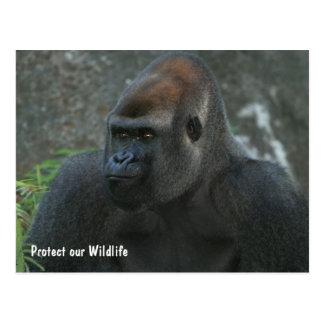 Protect our Wildlife Gorilla Postcard