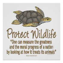 Protect Sea Turtles Poster