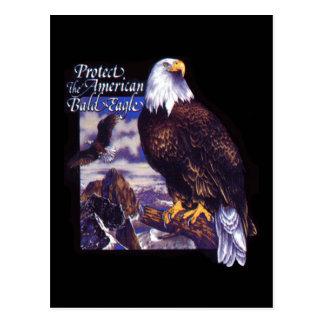 Protect The American Bald Eagle Postcard