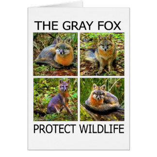 PROTECT WILDLIFE CARD