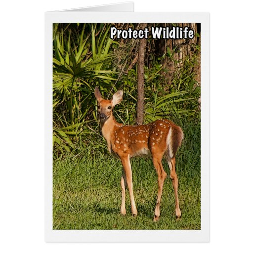 Protect Wildlife Greeting Card