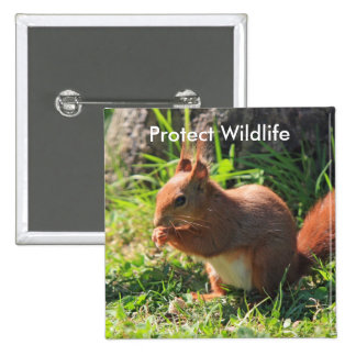 Protect Wildlife red squirrel photo button, pin