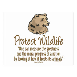 Protect Wildlife, Ursus, Bears Postcard