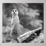 """""""Protective Meerkat"""" Poster"""