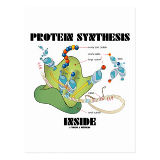 Protein Synthesis Inside (Cell Biology) Postcard