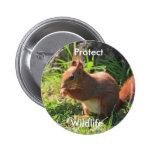 Proteja el botón de la foto de la ardilla roja de  pin