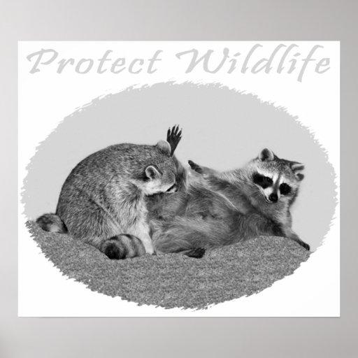 Proteja el poster del mapache de la fauna
