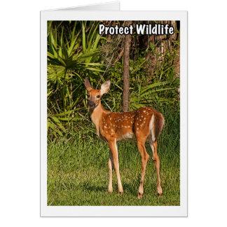 Proteja la fauna tarjeta de felicitación