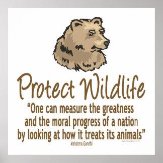 . Proteja la fauna, Ursus, osos Póster