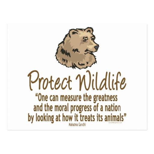 Proteja la fauna, Ursus, osos Tarjetas Postales