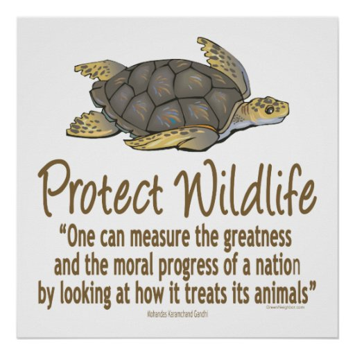 Proteja las tortugas de mar póster