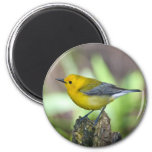 Prothonotary Warbler 2 Inch Round Magnet