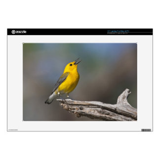 Prothonotary Warbler adult male in spring, Texas 2 Decals For Laptops