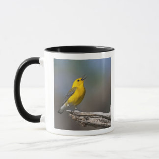 Prothonotary Warbler adult male in spring, Texas 2 Mug