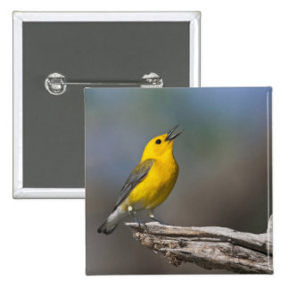 Prothonotary Warbler adult male in spring, Texas 2 Pinback Button
