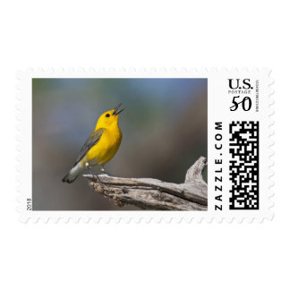 Prothonotary Warbler adult male in spring, Texas 2 Postage
