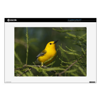 Prothonotary Warbler adult male in spring, Texas Laptop Decals