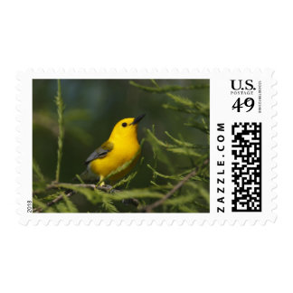 Prothonotary Warbler adult male in spring, Texas Postage Stamp
