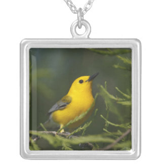 Prothonotary Warbler adult male in spring, Texas Square Pendant Necklace