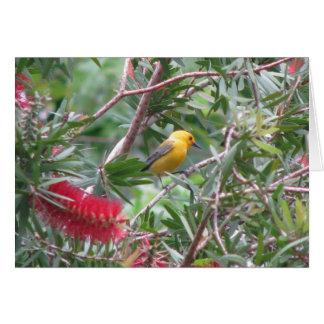 Prothonotary Warbler in Bottlebrush Cards
