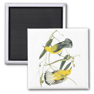 Prothonotary Warbler, John Audubon Fridge Magnets