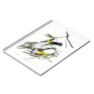 Prothonotary Warbler John James Audubon Birds Notebook