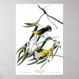 Prothonotary Warbler John James Audubon Birds Poster