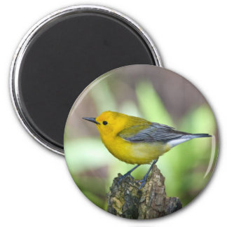 Prothonotary Warbler Magnet
