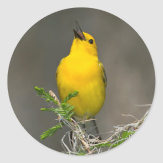 Prothonotary Warbler (Prothonotaria Citrea) Male Classic Round Sticker