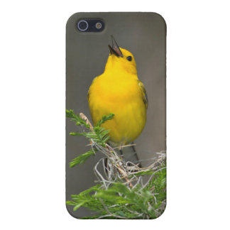 Prothonotary Warbler (Prothonotaria Citrea) Male Cover For iPhone SE/5/5s