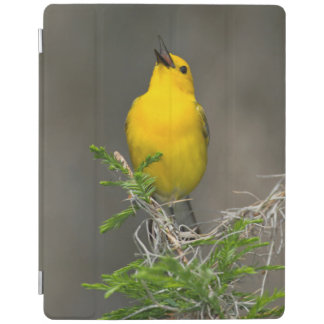 Prothonotary Warbler (Prothonotaria Citrea) Male iPad Cover