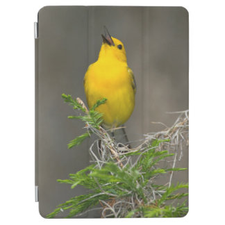Prothonotary Warbler (Prothonotaria Citrea) Male iPad Air Cover