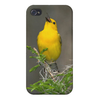 Prothonotary Warbler (Prothonotaria Citrea) Male iPhone 4/4S Cover