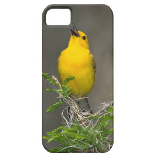 Prothonotary Warbler (Prothonotaria Citrea) Male iPhone SE/5/5s Case