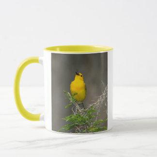 Prothonotary Warbler (Prothonotaria Citrea) Male Mug