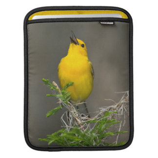 Prothonotary Warbler (Prothonotaria Citrea) Male Sleeve For iPads