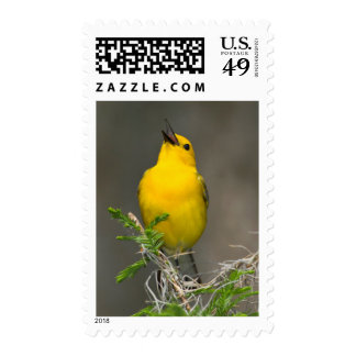 Prothonotary Warbler (Prothonotaria Citrea) Male Stamp