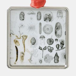 Protozoa and Coelenterata Metal Ornament