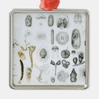 Protozoa and Coelenterata Christmas Ornaments