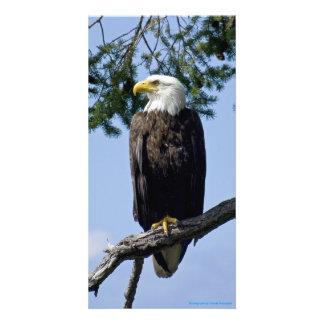 Proud Bald Eagle - Photo Card