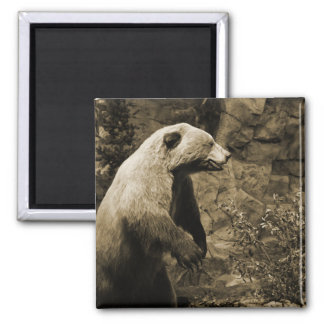 Proud Bear 2 Inch Square Magnet