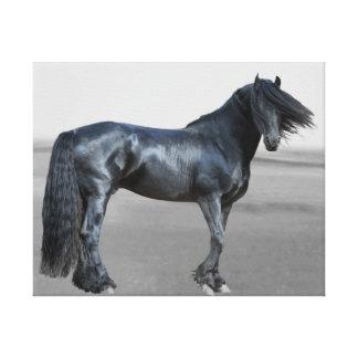 Proud Friesian black stallion Canvas Print