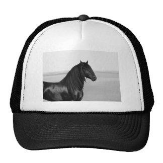Proud Friesian black stallion horse Hat