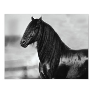 Proud Friesian black stallion horse 4.25x5.5 Paper Invitation Card