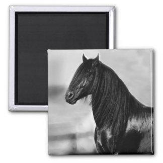 Proud Friesian black stallion horse Magnet
