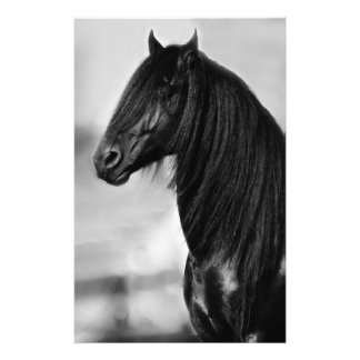 Proud Friesian black stallion horse Stationery