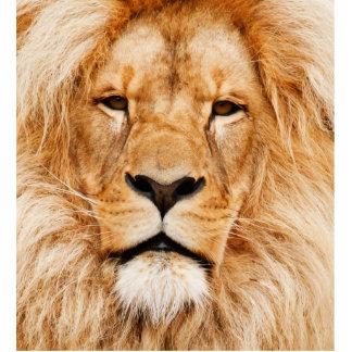 Proud Lion Portrait Cutout